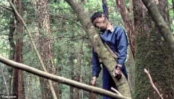 Лес на горе Фудзи место самоубийц Японии: каждый год 100 смертей