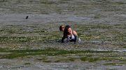 Две девочки спасали из грязи собаку, но застряли: пришлось спасать их