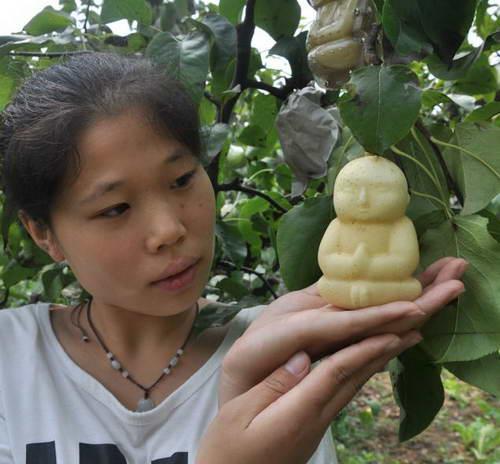Груши - Будда для продажи