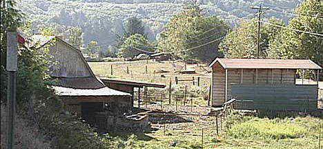 Ферма свиней в Орегоне - место трагедии