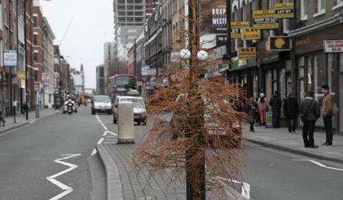 Эта елка умерла считает Дин Стоктон