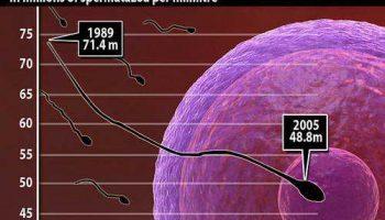 Жирная пища ухудшает качество спермы на 40%