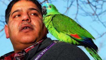 Попугай Рокет говорит на трех языках