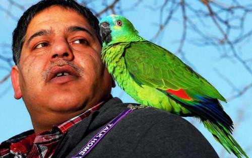 Попугай Рокет говорит на 3-х языках