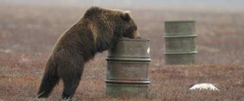 Медведь вдыхает пары керосина