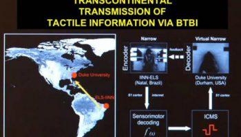 Сеанс телепатии между крысой в США и крысой в Бразилии