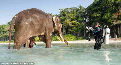 Слон Раджан уже на пенсии - 64 года