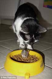 кот Манго боится спугнуть мышь из своей кормушки