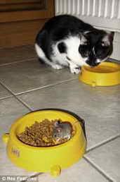 Кот решился попить водички