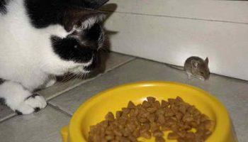 В Денвере  власти хотят запретить удаление когтей у котов и кошек