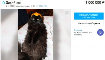 """Купить кота за 1000000 на """"Авито"""" Ростов-на-Дону"""
