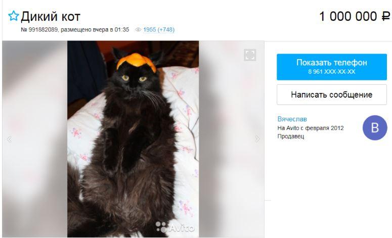кот за 1 миллион рублей