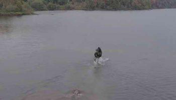 Лось против волка – снято с дрона на севере Онтарио