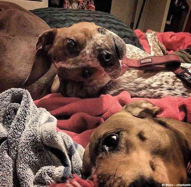 Несчастная собака Оптическая иллюзия