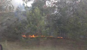Пожар в Чернобыле. Горит рыжий лес