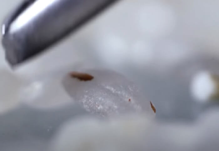 Красные полосочки в рисе